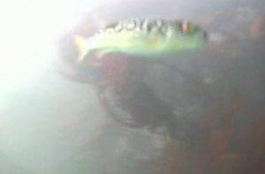 arashima2009101005
