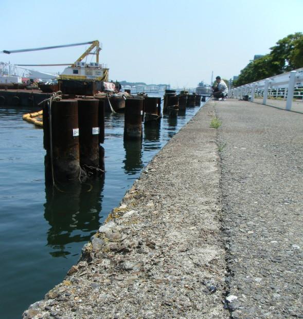 港 釣り 根岸