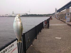 若洲海浜公園 釣果02 サッパ