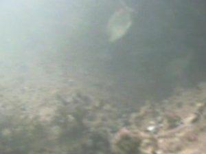 enoshima20091101