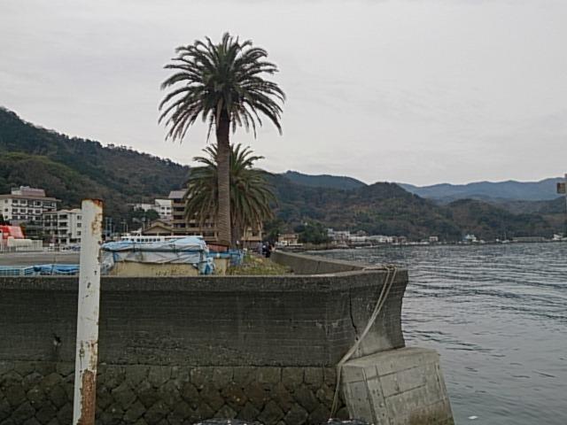 内浦港 釣り禁止マル秘情報