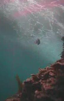 もずがね 水中写真03