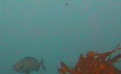 もずがね 水中写真07