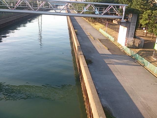 猫実川 河岸