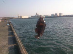大井川港 釣果 オハグロベラ