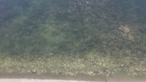 千鳥町ホームセンター横 水深は非常に浅い