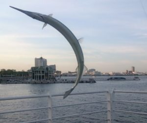新港パーク 釣果 大型サヨリ