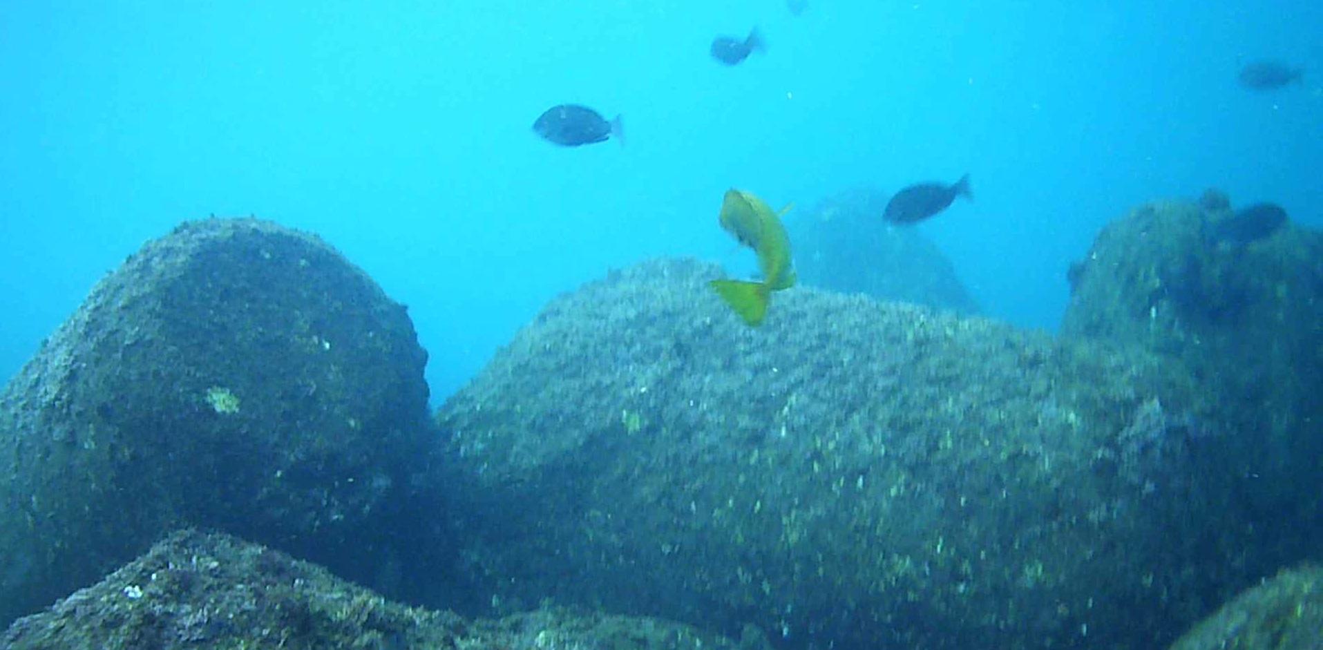ハトヤ裏 水中写真03