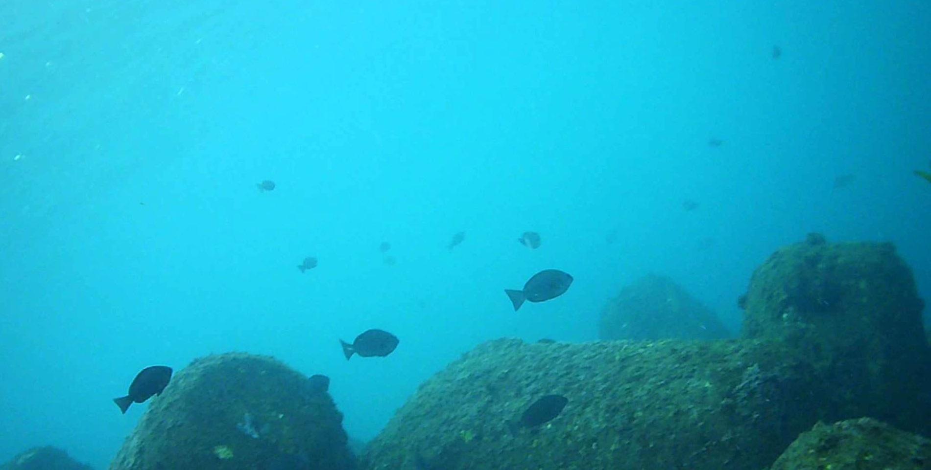 ハトヤ裏 水中写真02