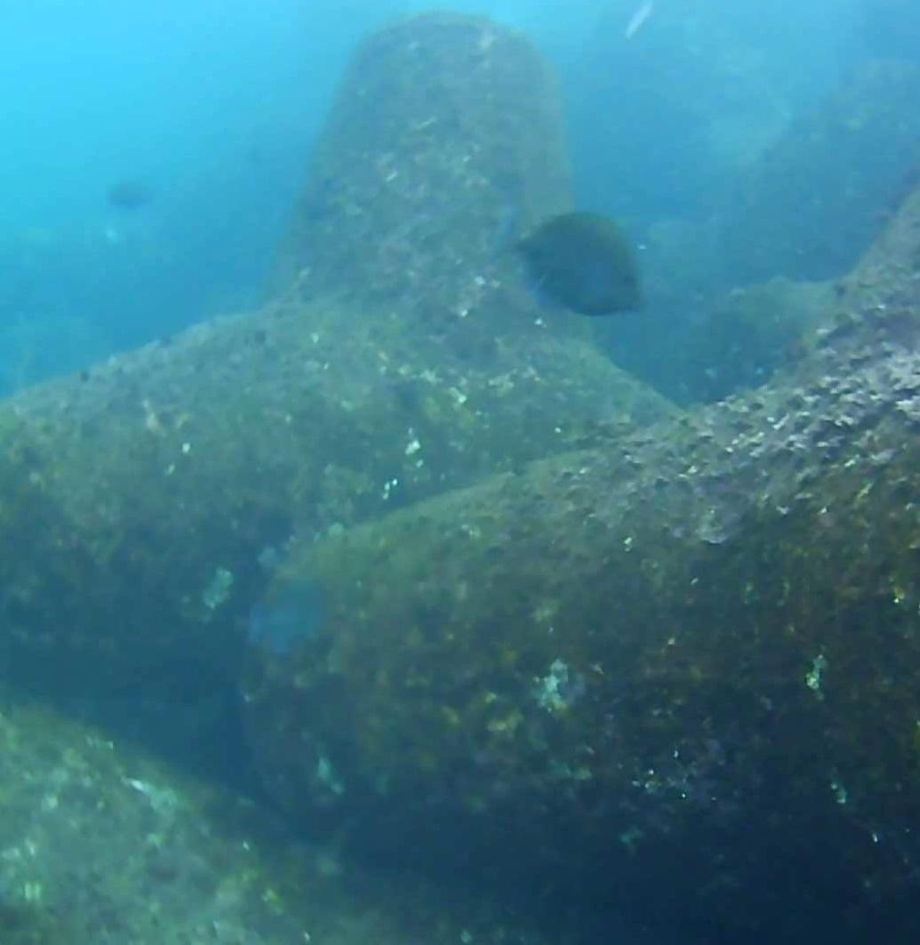 ハトヤ裏 水中写真04