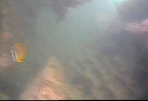 芝浦埋立地護岸 水中写真02 海底 チョウチョウウオ