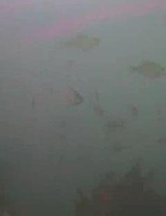 金谷漁港 水中写真05