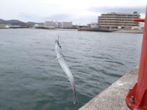 新宿漁港 釣果02