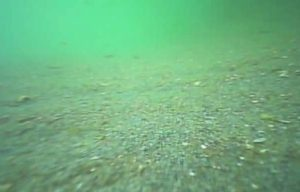 浜名湖 新居海釣公園 水中写真砂地