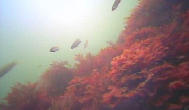 長浜水路 水中写真04