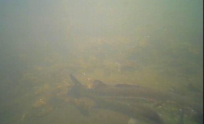 高島水際線公園 水中写真02