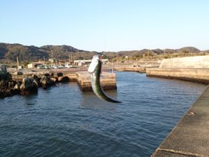根本港 釣果02