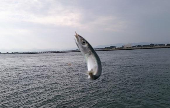 浜名湖 新居海釣公園 釣果01