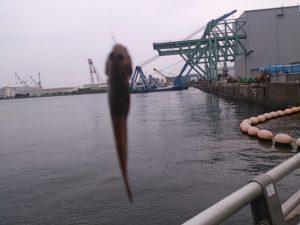 大岡川分水路 釣果ハゼ01