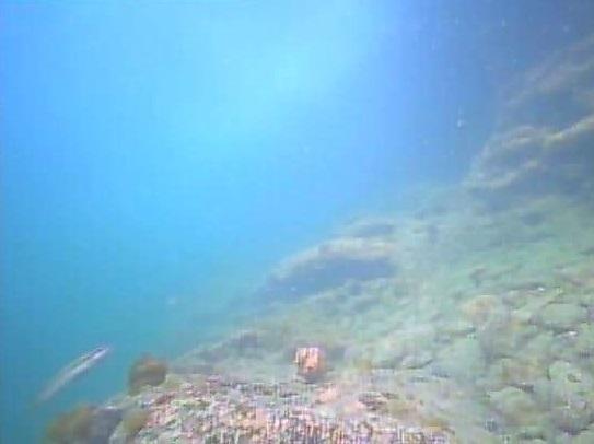 明鐘岬 水中写真002