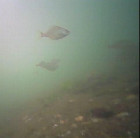 野島公園 水中写真02