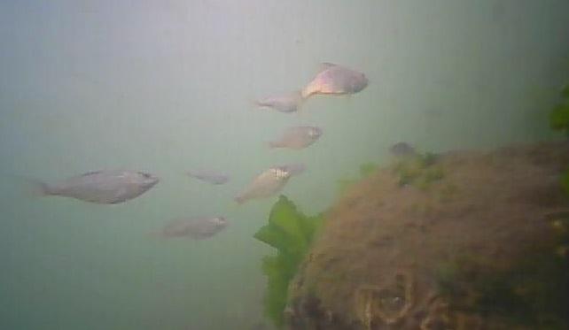 野島公園 水中写真03