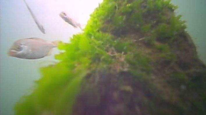 野島公園 水中写真05