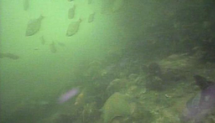 平潟港 水中写真08