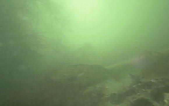 平潟港 水中写真10