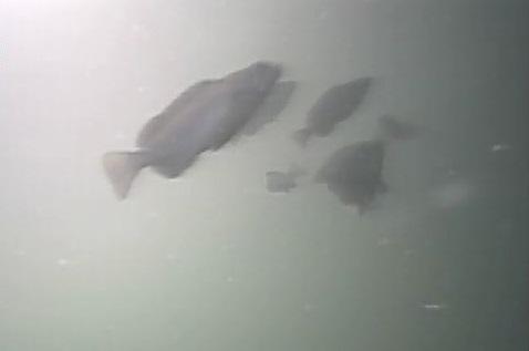 平潟港 水中写真04