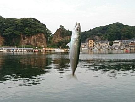 平潟港 釣果02