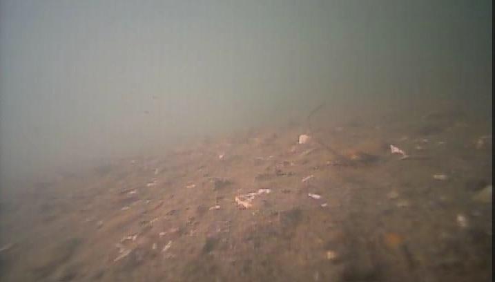 高須船溜 水中写真01