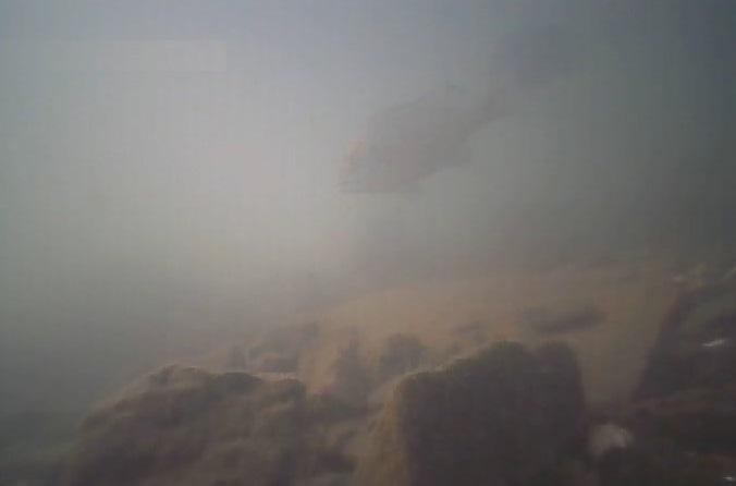 高須船溜 水中写真02