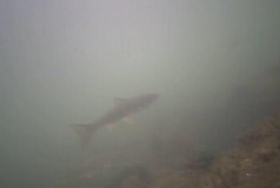 高洲海浜公園 水中写真04