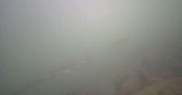 高洲海浜公園 水中写真06