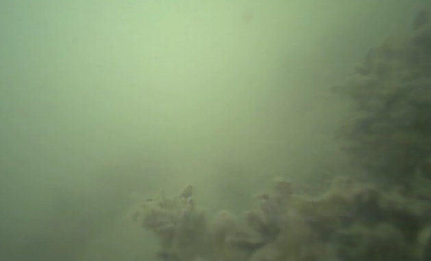飯岡漁港 水中写真02