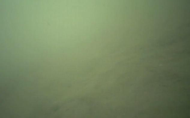 飯岡漁港 水中写真01
