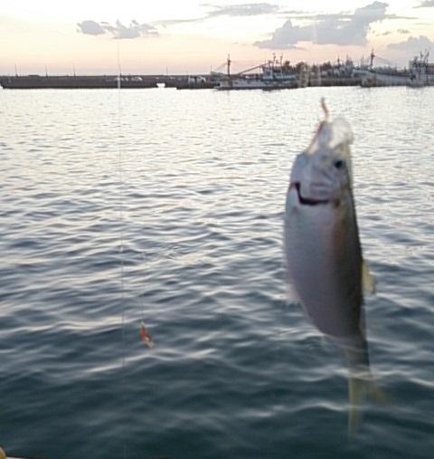 飯岡漁港 釣果01