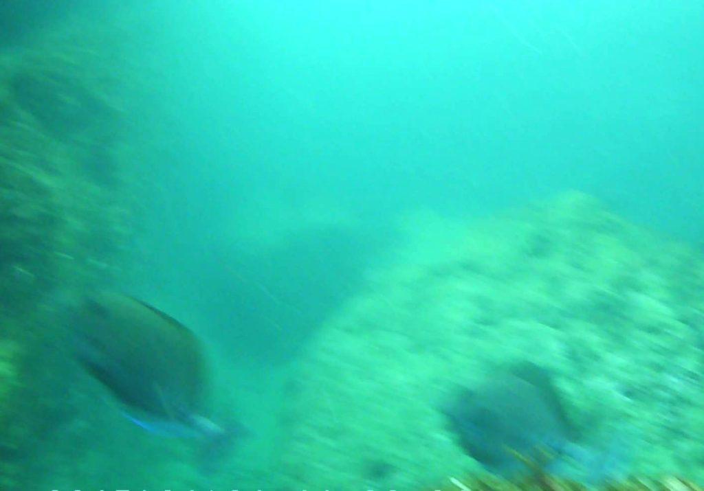 城ケ島 四畳半 水中写真05