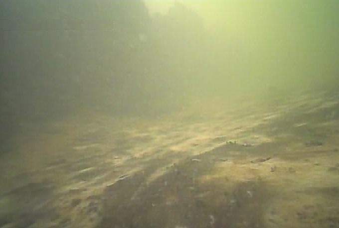 木場公園 水中写真01
