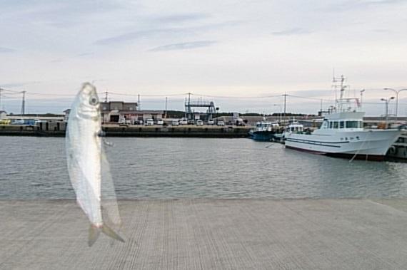日立港第五埠頭 釣果01