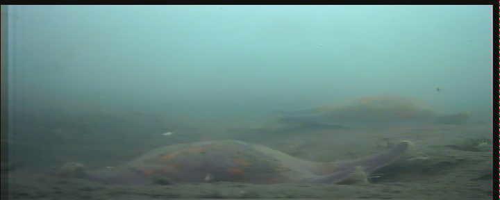 日立港第五埠頭 水中写真01