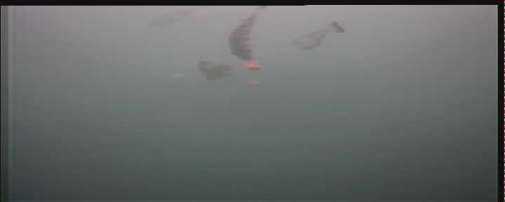 日立港第五埠頭 水中写真05