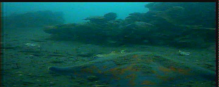 日立港第五埠頭 水中写真02