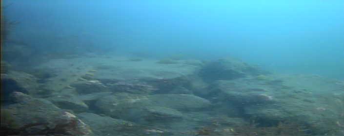 宮川港 海底