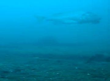 東港第2東防波堤 水中写真05