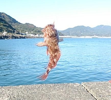 西倉沢漁港 釣果 カサゴ