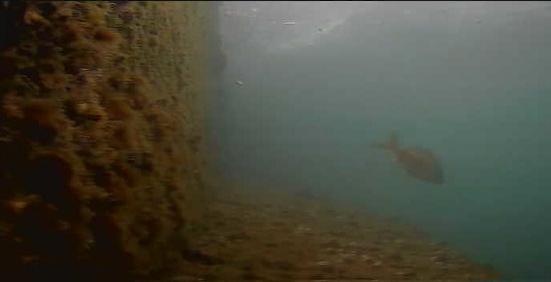 六甲アイランドマリンパーク水中写真01