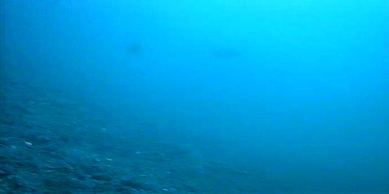 六甲アイランドマリンパーク水中写真03