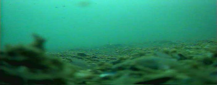 六甲アイランドマリンパーク水中写真04